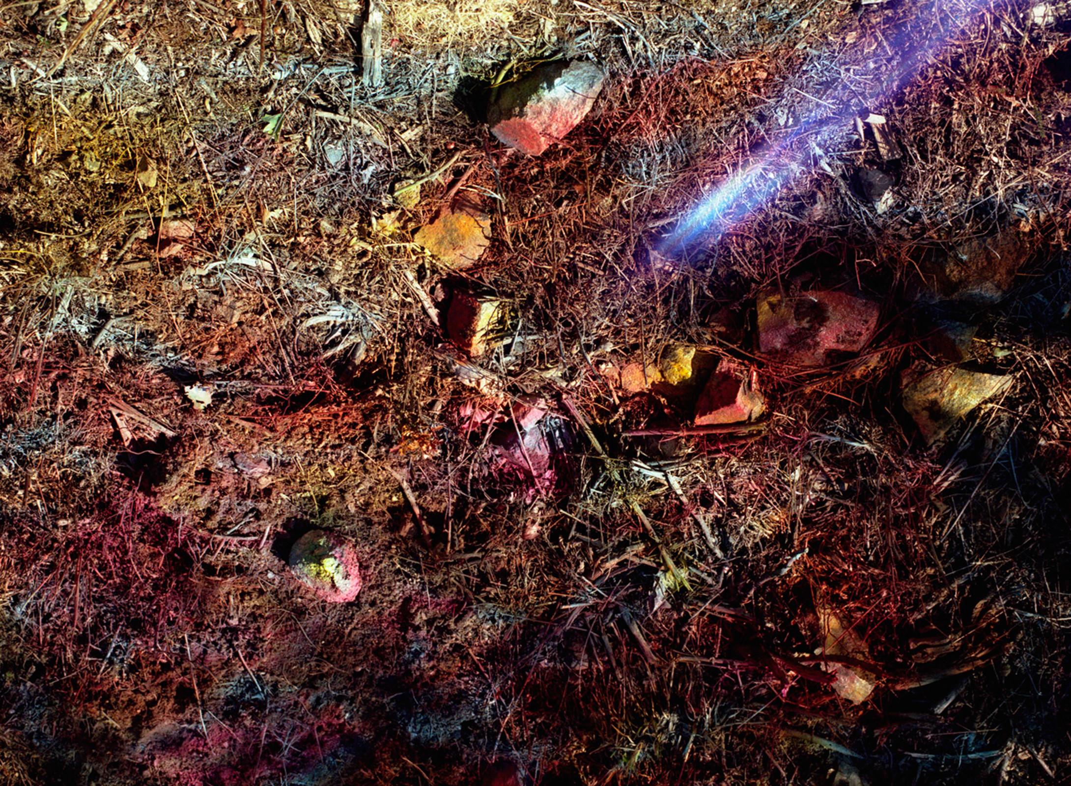 Shady — © 2005 Estelle Hanania